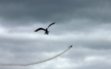 Gull and Plane